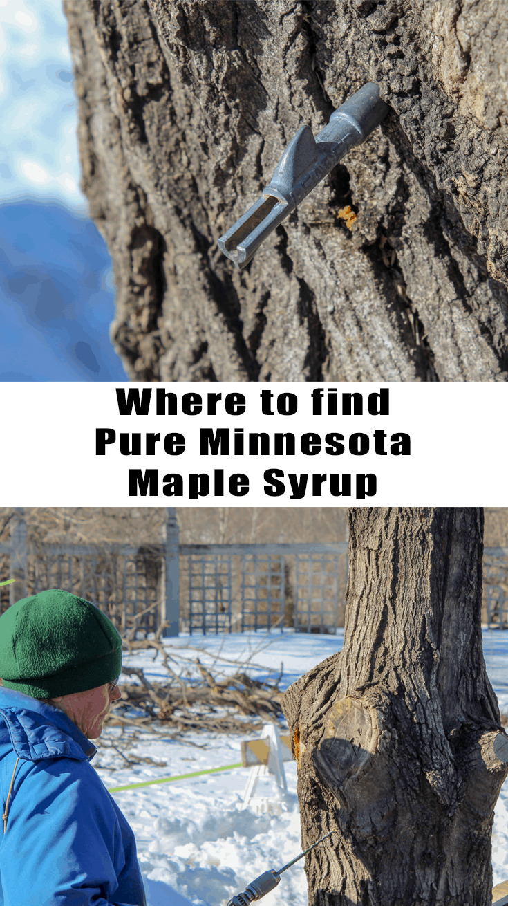 Where to find Pure MN Maple Syrup. How to tap your own tree and so much more! Twin Cities | Spring Time | Family Fun | Landscape Arboretum | Minnesota Maple Syrup