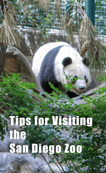 Tips for your visit to the San Diego Zoo in California. How to see all the animals you want in one day. Family Fun | Zoos | Pandas | Time Saving Tips