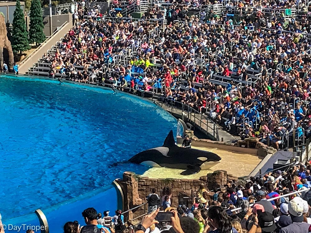 Orcha Show at SeaWorld San Diego