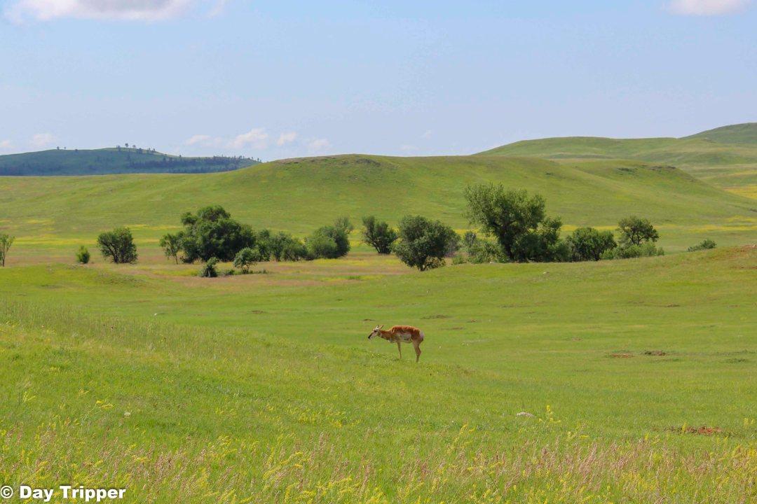 Custer State Park Wildlife Loop