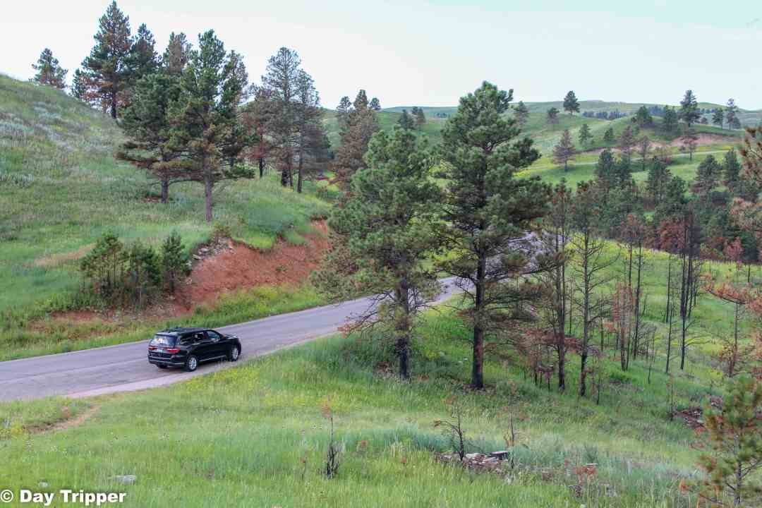 The wildlife loop at custer state park