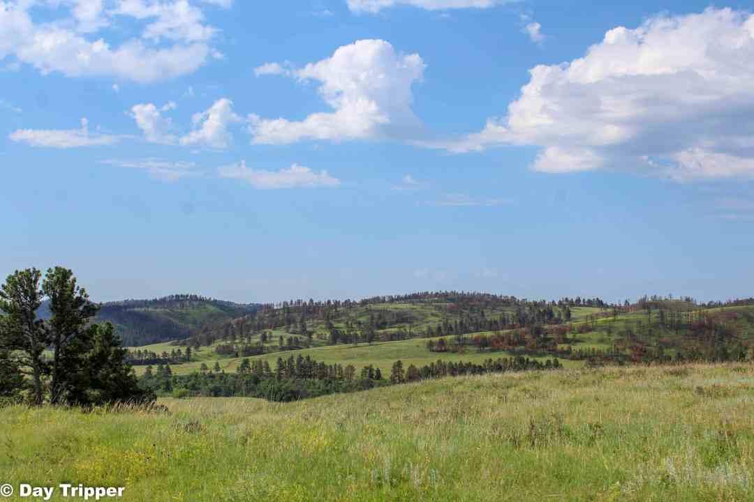 Driving Custer State Park Wildlife Loop