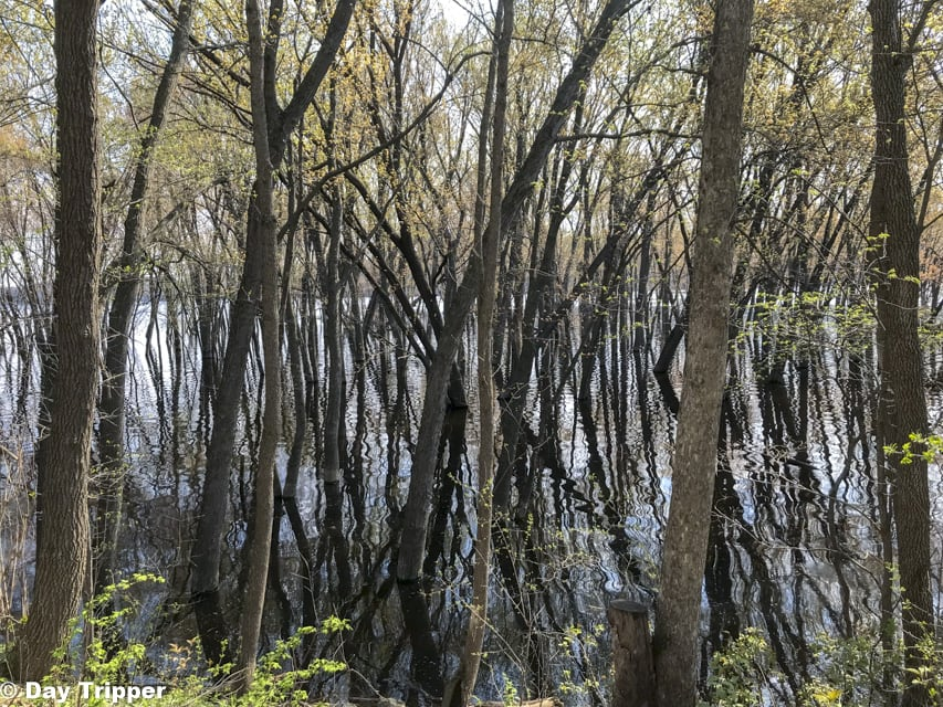 Flooded Trees at Afton State Park