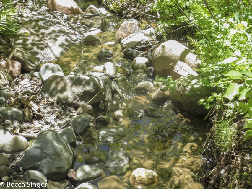 Stream running through Jay Cook State Park Hiking Club Trail