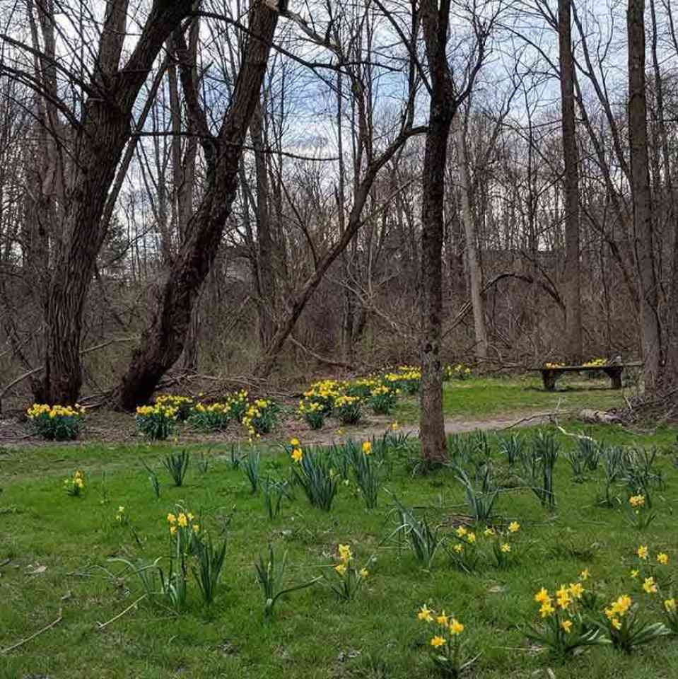 Powder Mills Park Daffodil Meadow Trail