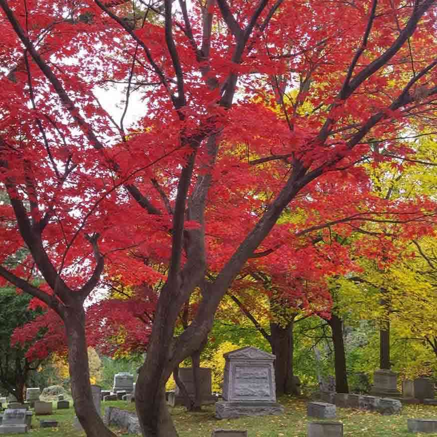 Public Gardens Around Rochester NY - Mount Hope Cemetery