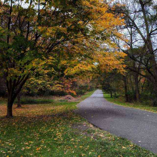 Durand Eastman Park Autumn Road