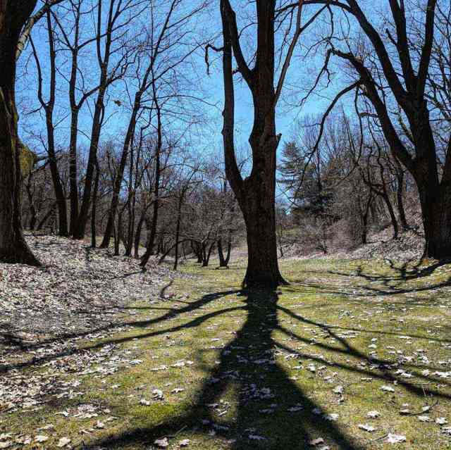 Durand Eastman Park long early spring shadows