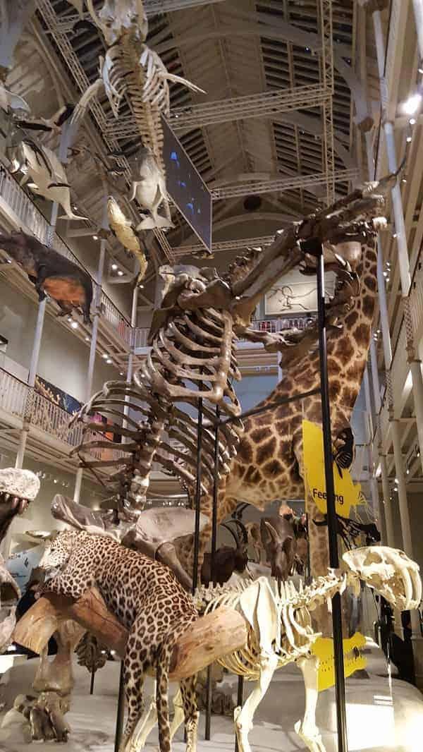Scotland National Museum