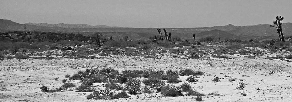 Desert B & W