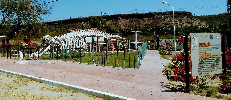 San Ignacio Whale Bones
