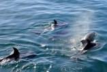 dolphins-2160498_1920.jpg
