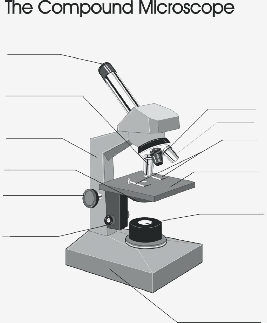 29 You Will Love Labeling A Compound Microscope