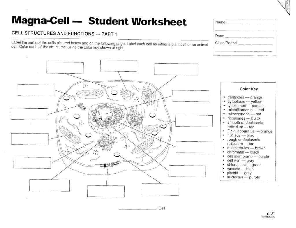 Label Plant Cell Worksheet