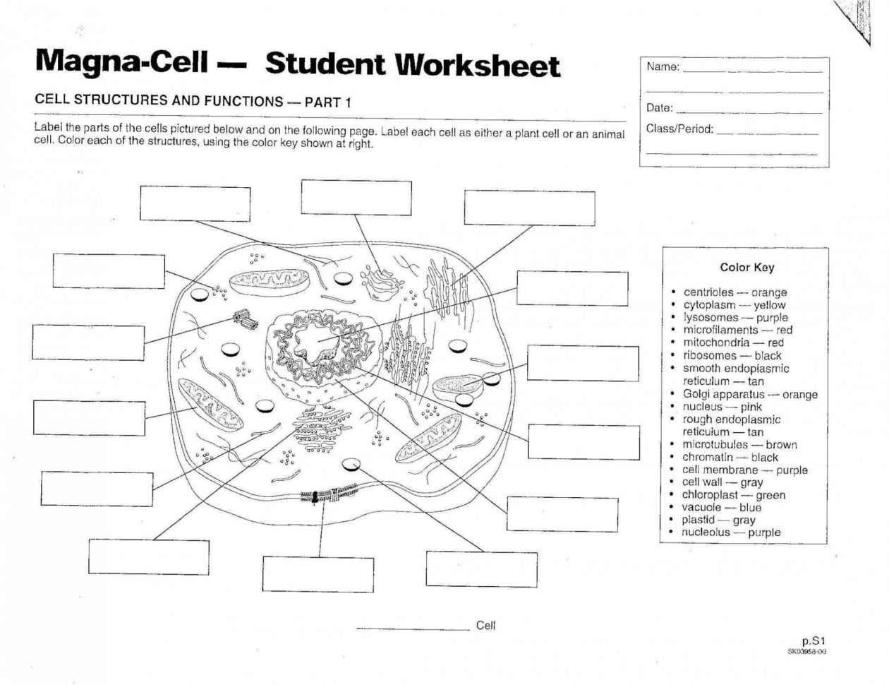 Animal Cell Coloring Worksheet Answers