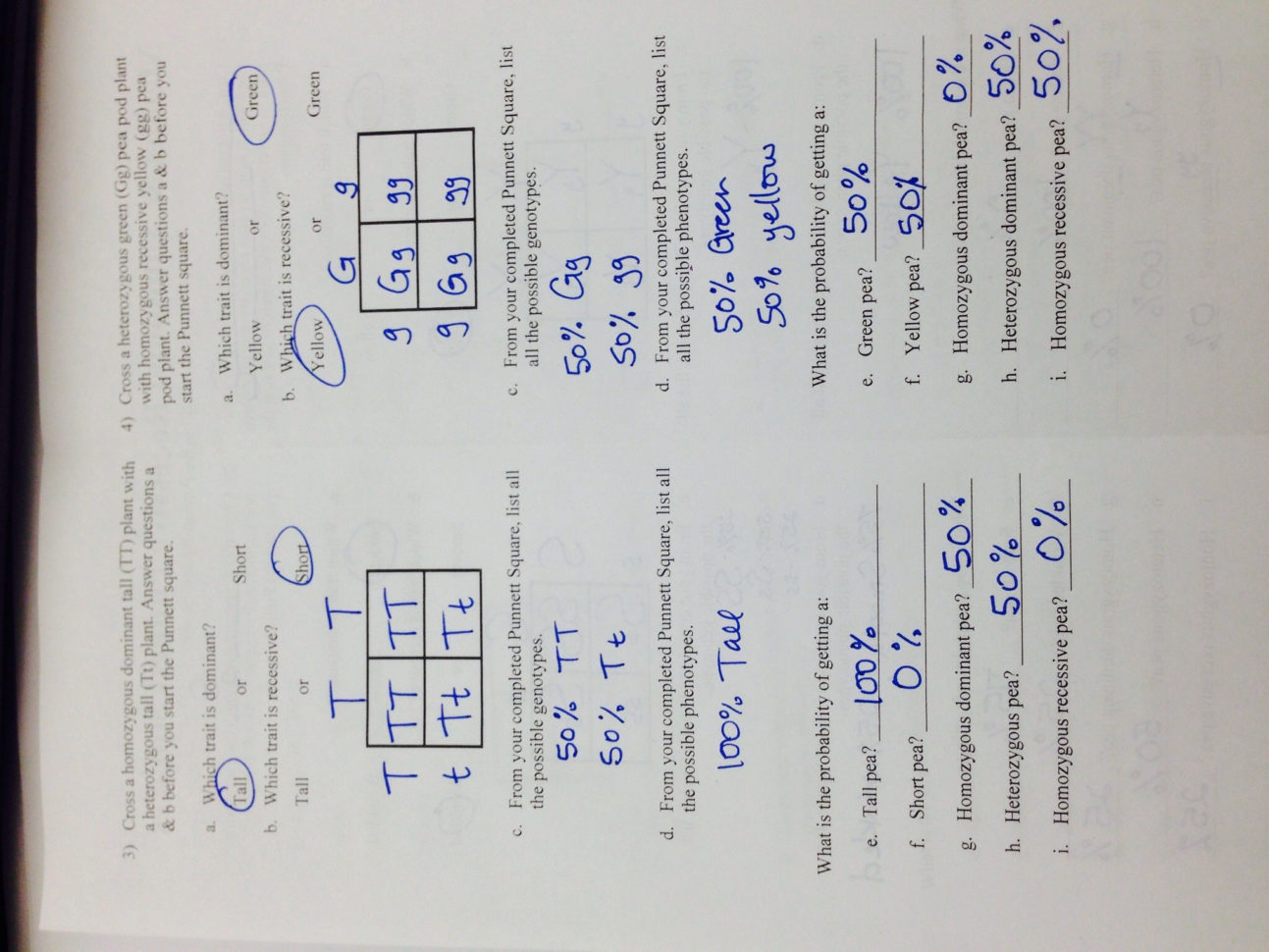 Genetics The Science Of Heredity The Test Cross Worksheet