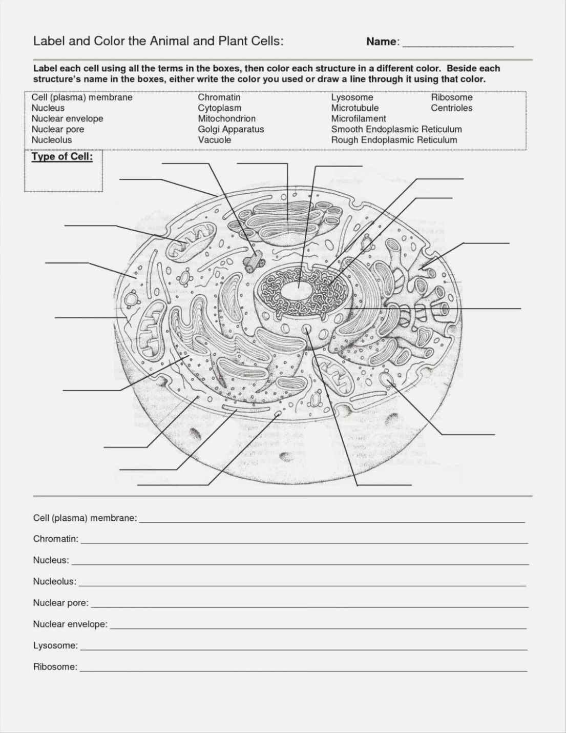 Cells Alive Animal Cell Worksheet Answer Key Db Excel