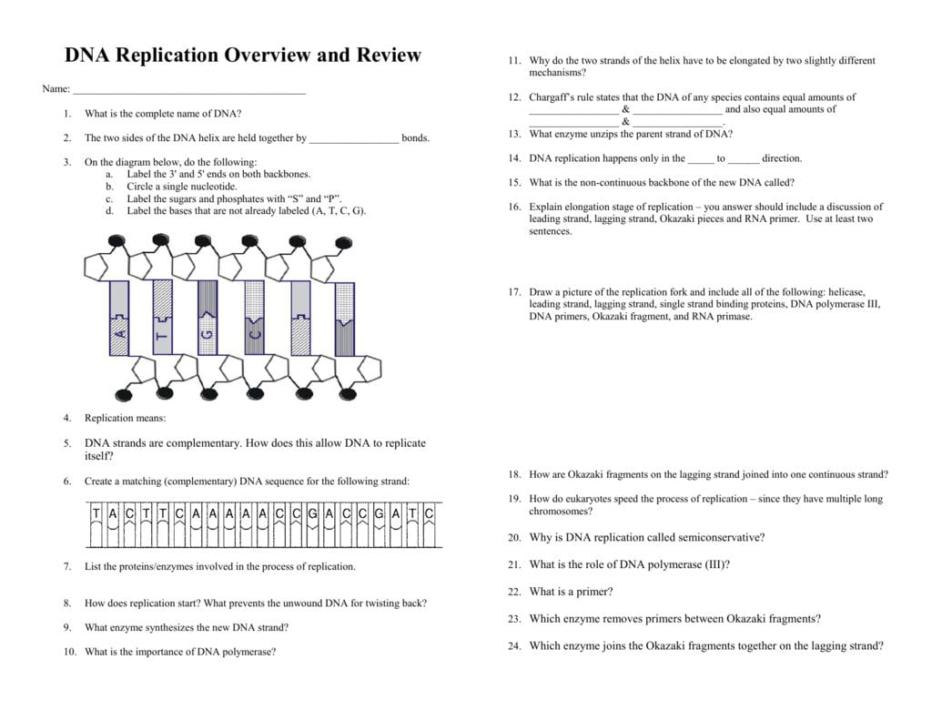 Dna Replication Review Worksheet Answers