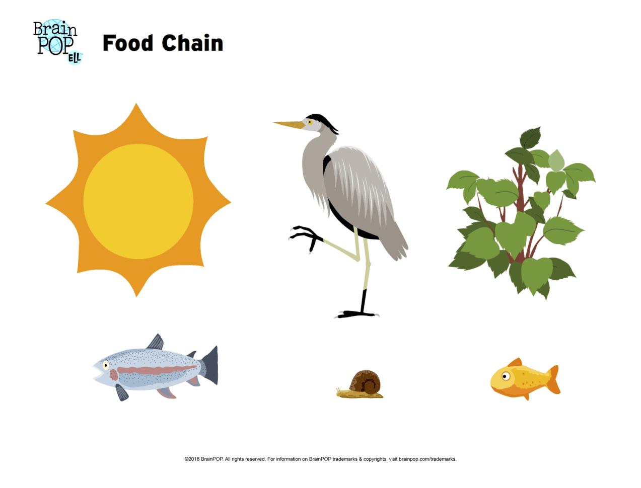 Food Chain Image Worksheet Brainpop Educators