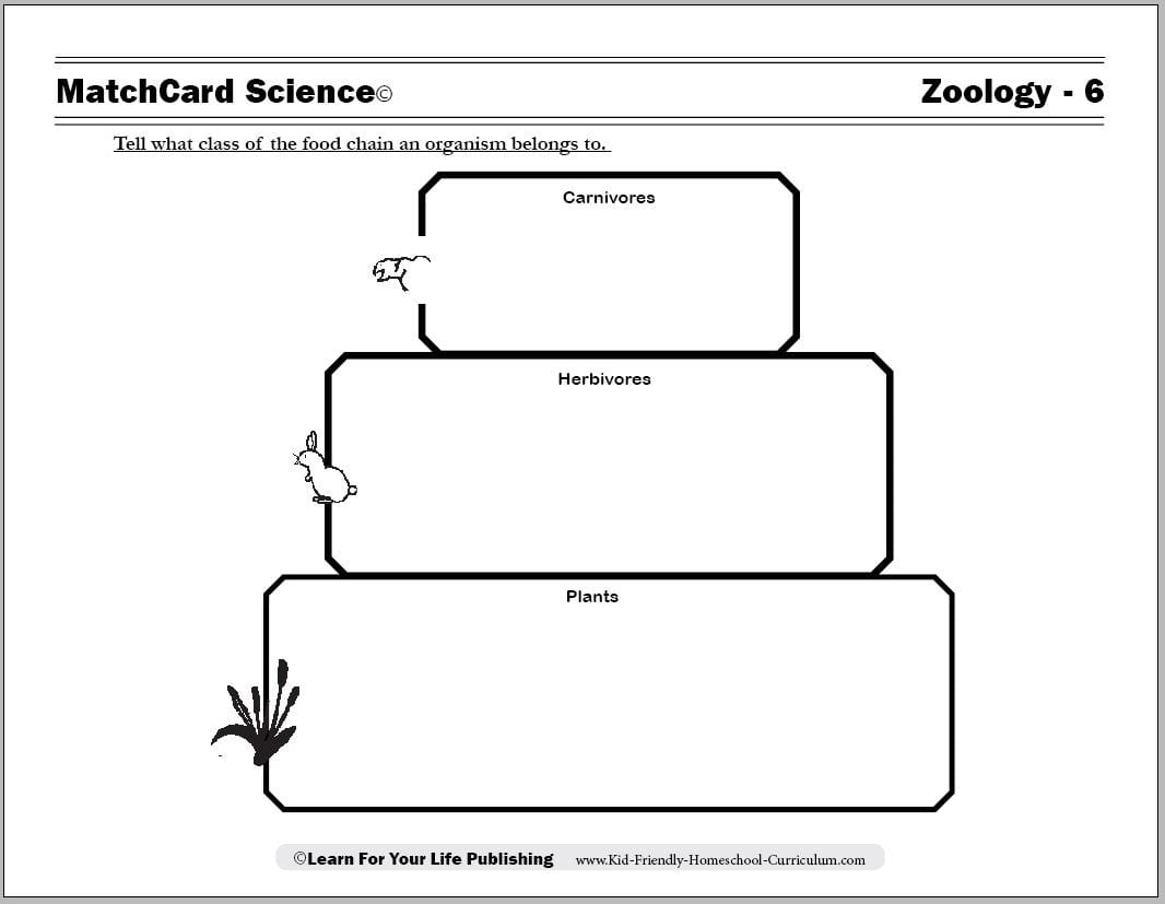 Food Chain Worksheet 5th Grade