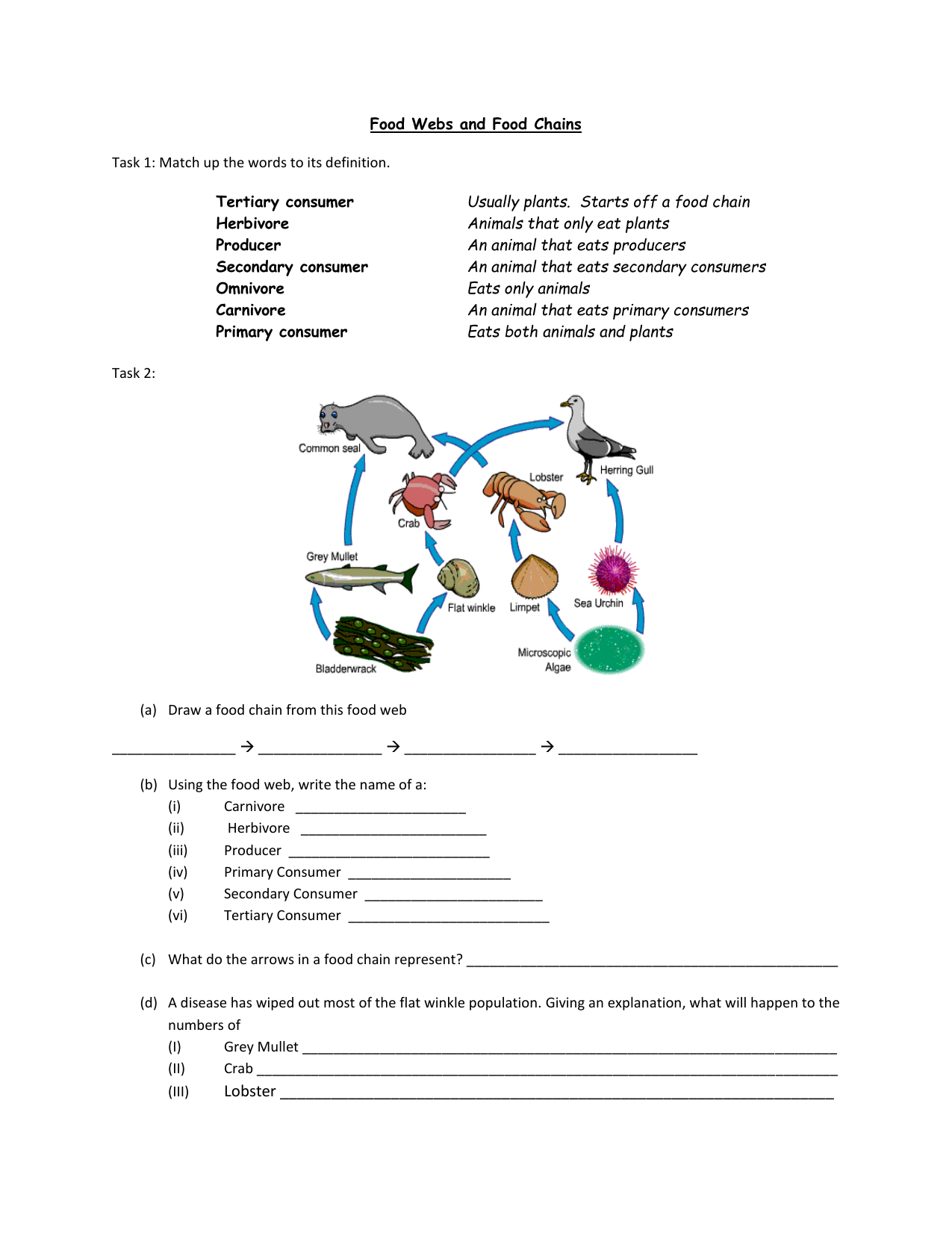 Draw A Food Web Worksheet