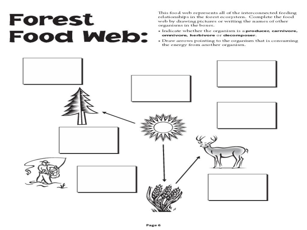 Food Web Worksheet Dar Conjugation Command Jobs