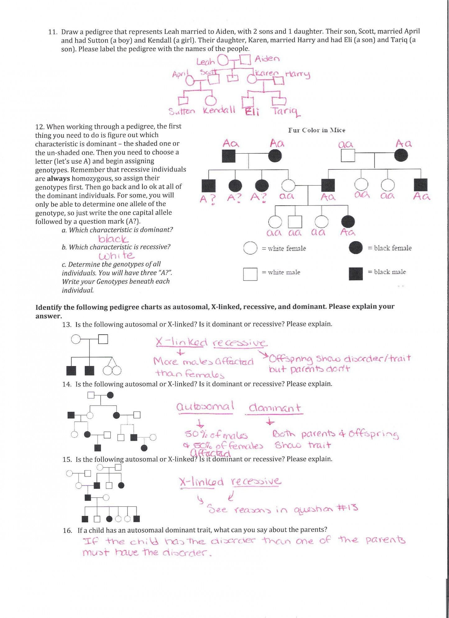 Mouse Party Worksheet Answers