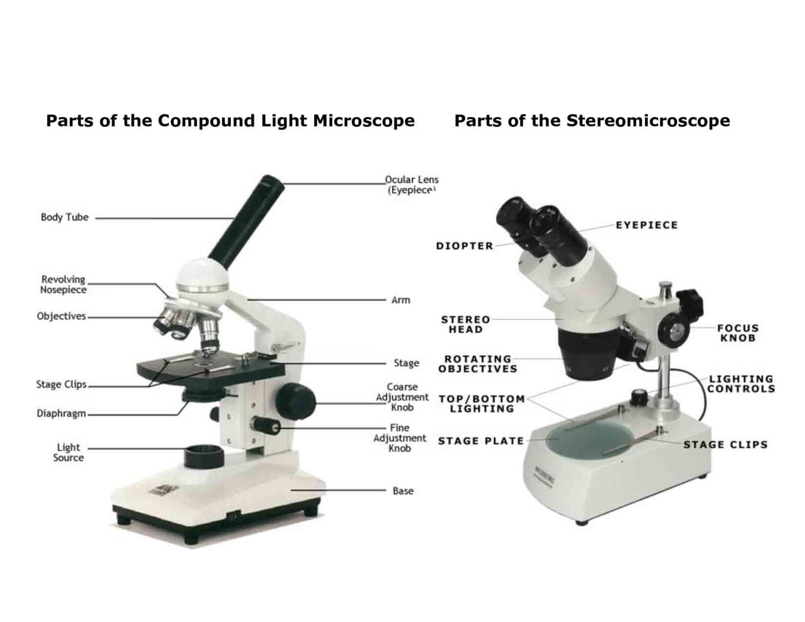 Light Microscope Main Parts Of Light Microscope Biology