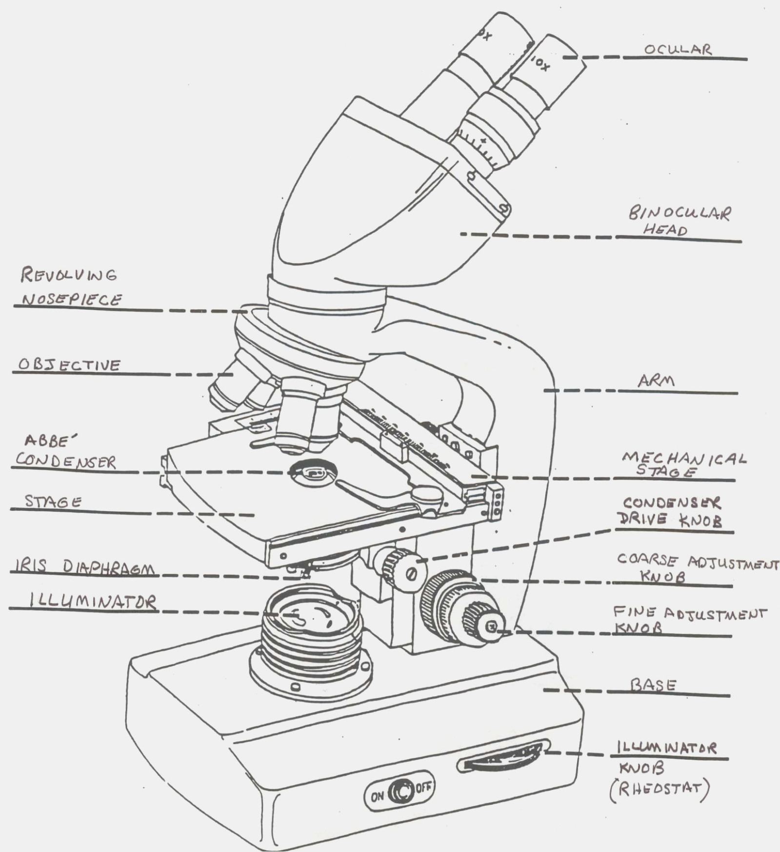 Microscope Labeling Worksheet Worksheets For All Download