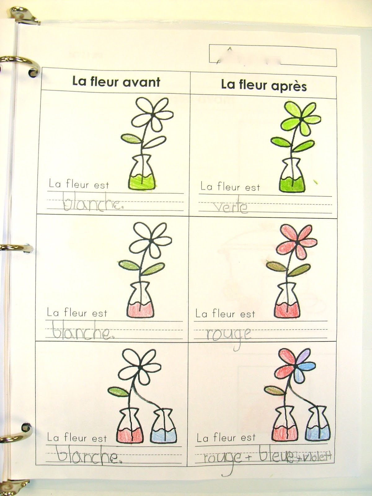 Food Coloring Flower Experiment Worksheet