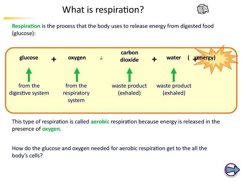 Photosynthesis Amp Cellular Respiration Worksheet Answers
