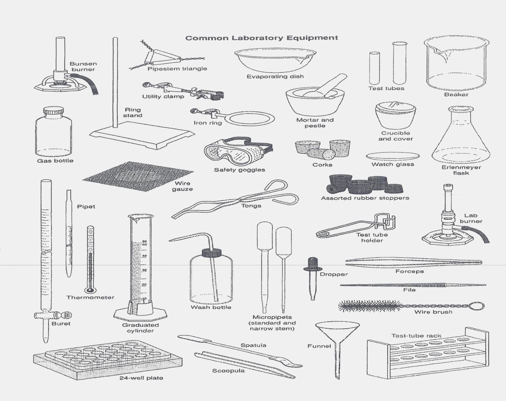 Label Lab Equipment Worksheet