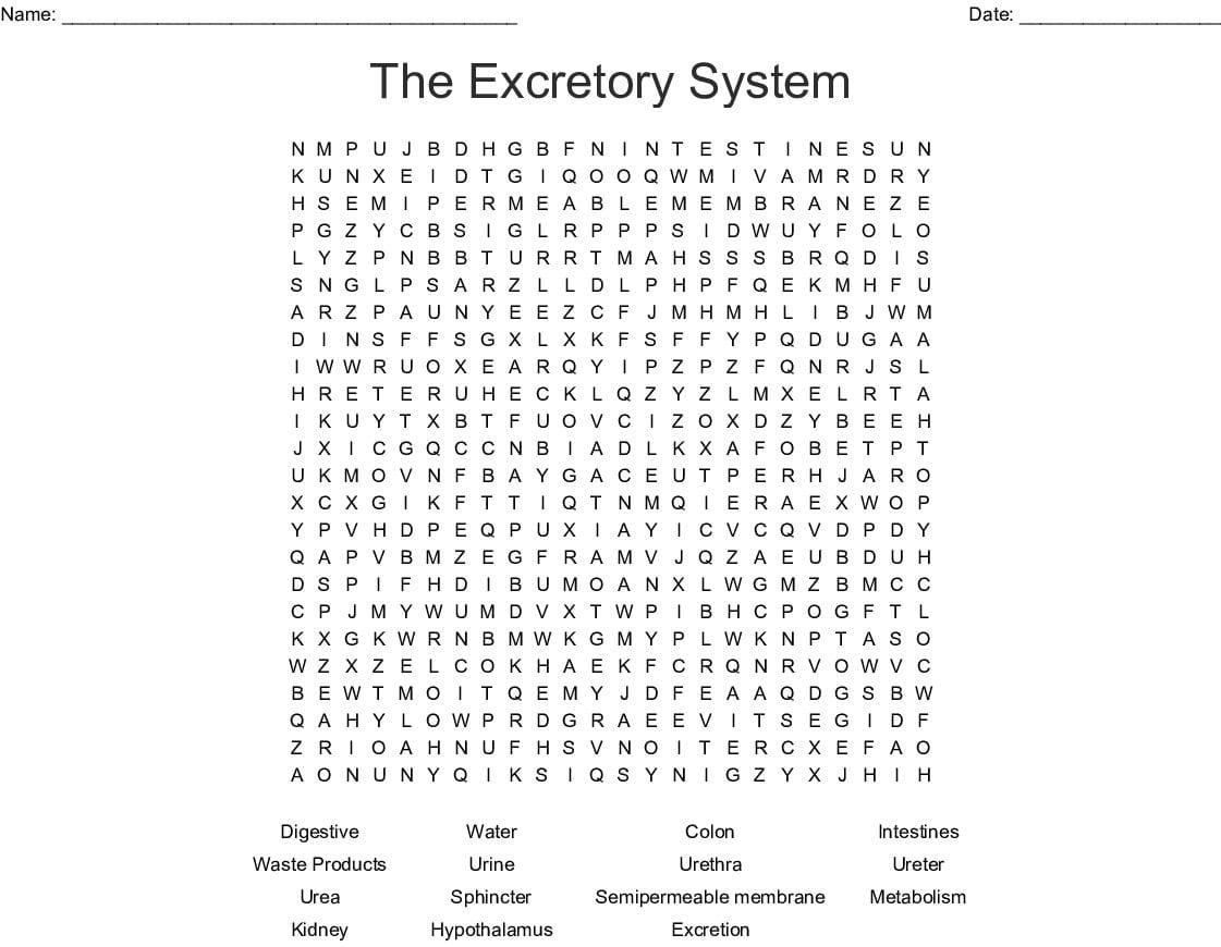 Urinary System Activity Worksheet