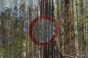 red_circle_pines