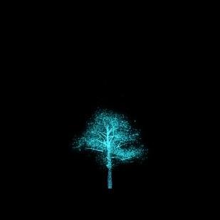 #10080 - the tree flourishes