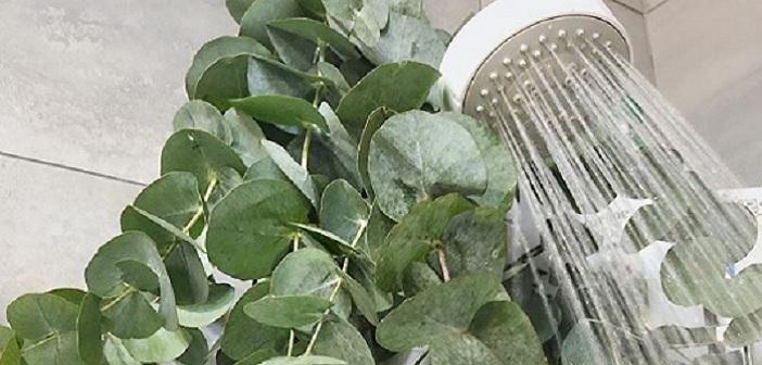 Duşa Okaliptüs Yaprakları Asmanın Faydaları