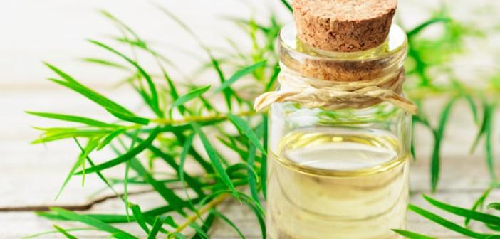 Çay Ağacı Yağı Şampuanı Nasıl Yapılır?