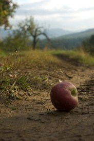 The Orchard at Alta Pass (©2008 David Boraks)