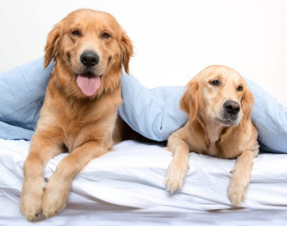 Adopt-a-Dog Month - Love Them Today and Love Them Tomorrow with a Pet Trust
