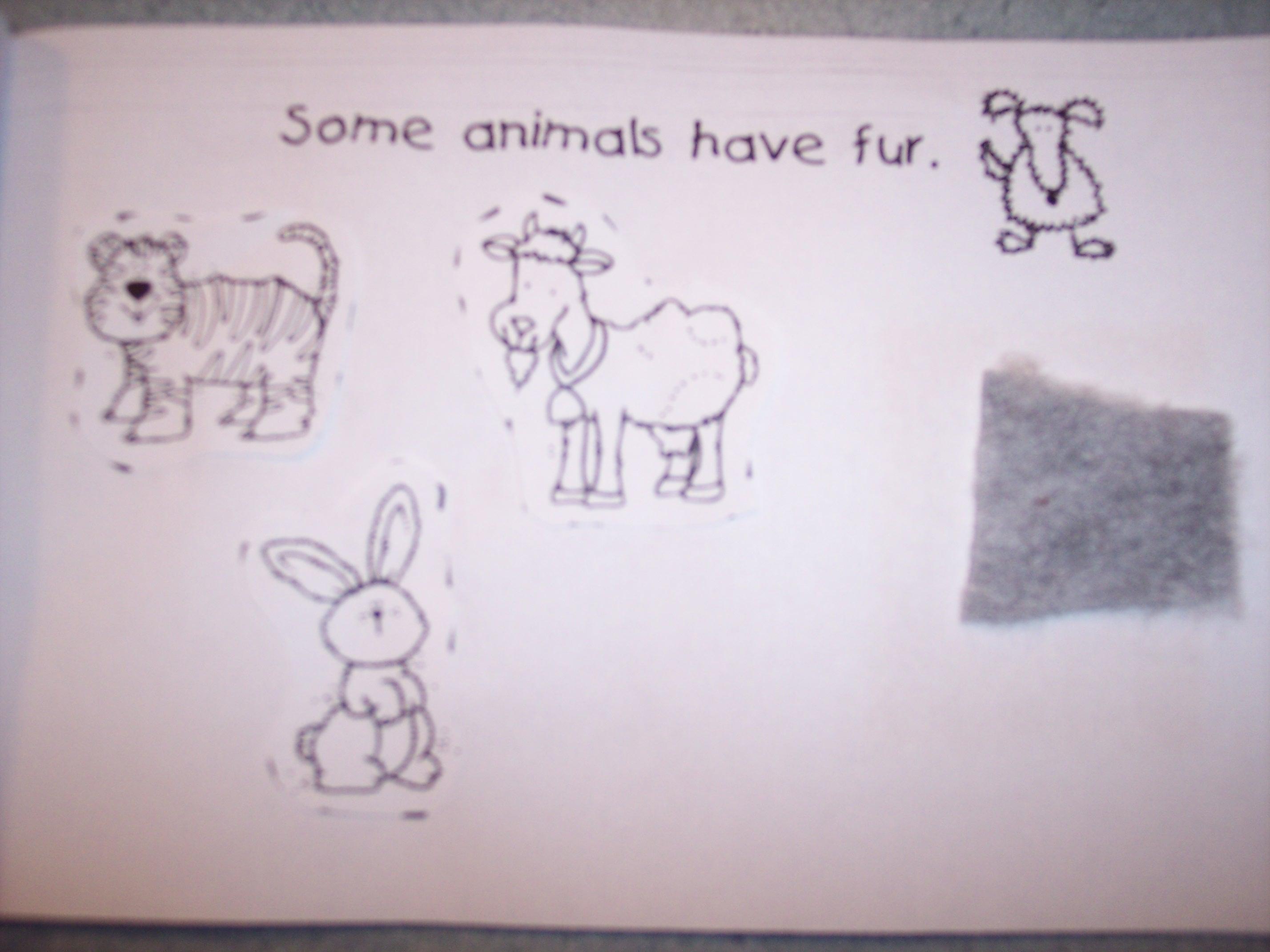 Fur Feathers Scales Worksheet Kindergarten Fur Best Free Printable Worksheets