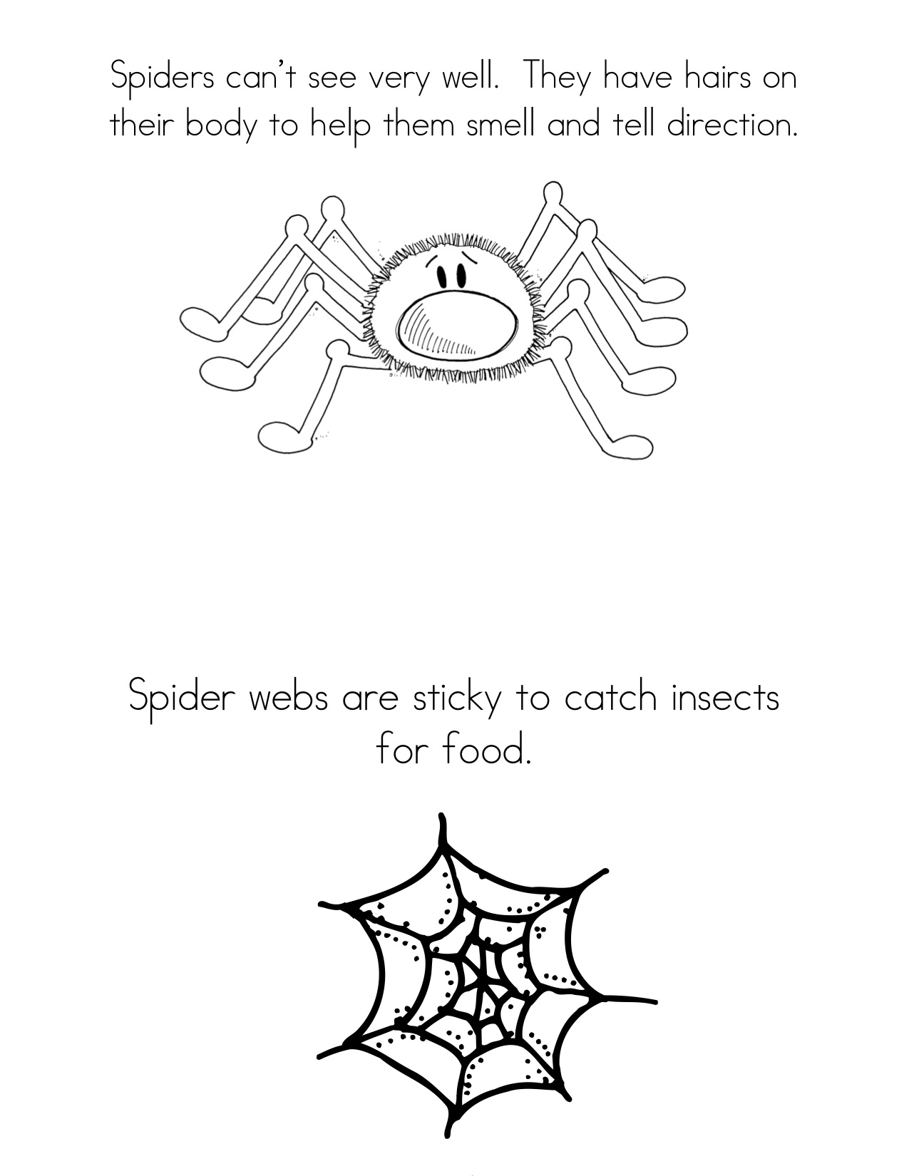 Spider Facts Worksheet