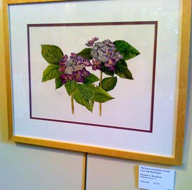 Sue Kuuskmae's watercolor, Lace Cap Hydrangea