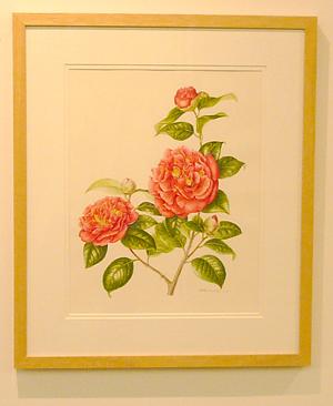 Camellia Japonica by Akiko Enokido, © 2009