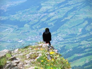 Vogel, im Hintergrund Steinen mit der Bahnlinie zwischen Arth-Goldau und Bellinzona.