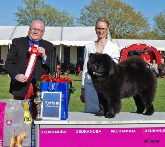 Chow Chow BIG Piuk Chow Possesses Black Passion Roskilde 2016