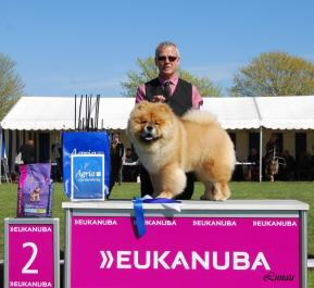 Chow Chow Piuk Chow A Paradise Of Happiness BIS2 hvalp Roskilde 2016
