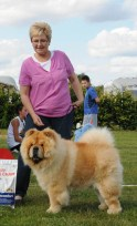 Chow Chow champion MI-PAO'S RED SUMAC på sommerskue 2015