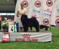 Chow Chow Piuk Chow Possesses Black Passion BIG4 Ballerup, Stine Hjelme