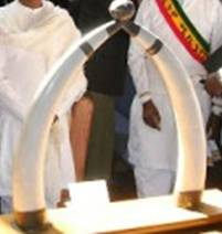 Ivory tusks given by an Ethiopian emperor have been stolen from the District building. (Photo courtesy MPD)