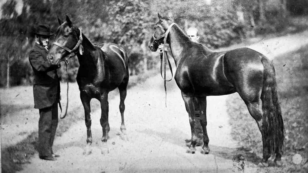 Vail Horses